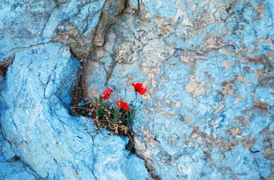 Flowers-in-the-stone